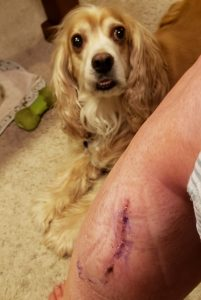 Photo of fresh surgical incision and dog